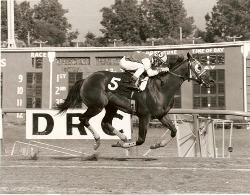 Mike Manganello on TV Vixen 1977 Mi. Bred Stakes