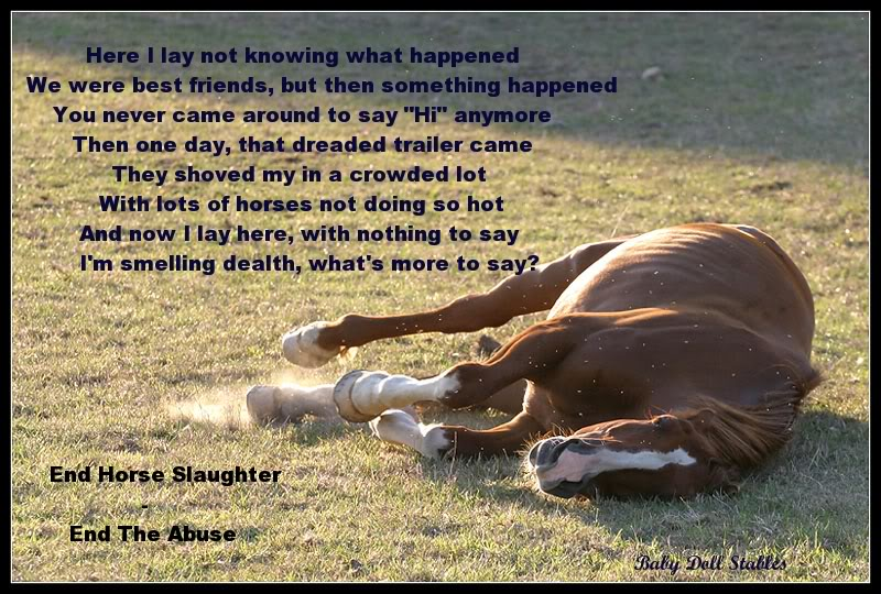 horse slaughter Today, the appropriations committee of the us house of representatives voted narrowly to give the green light for the reopening of horse slaughter plants in.