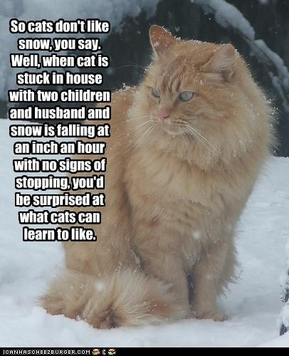 Snow Cat lol