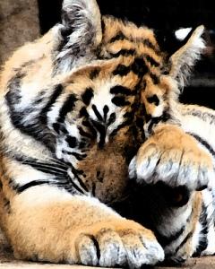 Tiger Defeat