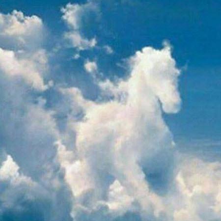 Horse Angel